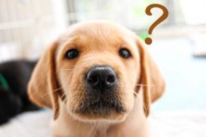 犬が吠えるのをやめさせるグッズは犬への拷問なの?