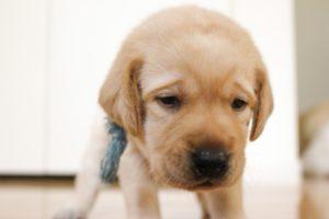 ワンブルはどれくらいのサイズ(犬の首)まで使用可能なのか?解説!