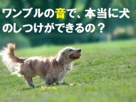 ワンブルの音で犬のしつけが可能な理由!