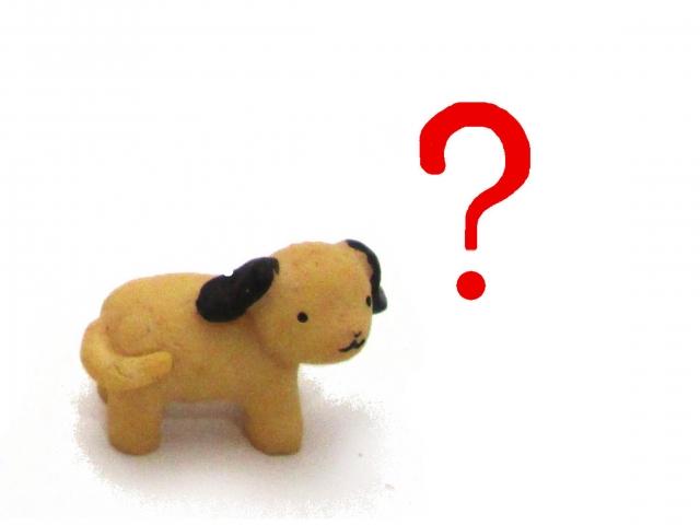 ワンブルを子犬で使用できるのはいつから?その理由も解説!