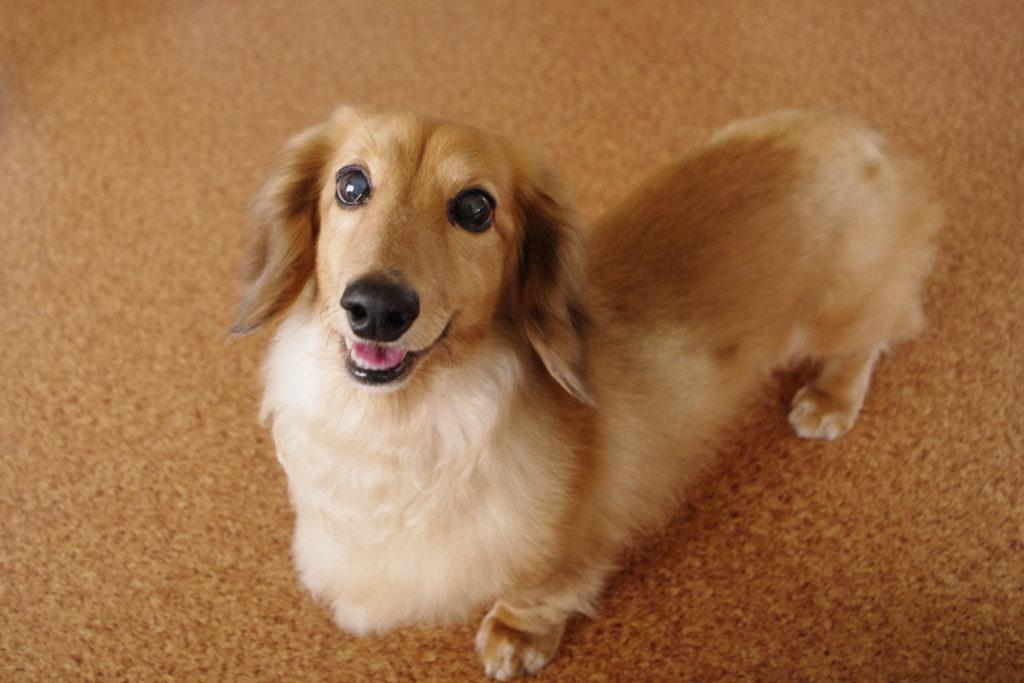 犬が吠える のを やめさせる音はワンブルで十分なのだろうか?