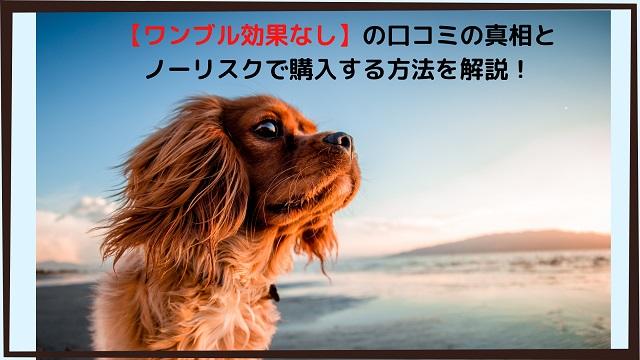 【ワンブル効果なし】の口コミの真相と、ノ ーリスクで購入する方法を解説! (1)